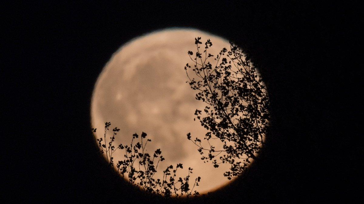 test Twitter Media - Look up! A stunning harvest moon starts tonight https://t.co/9m7xy1MYAX https://t.co/4C8A4h9J4W