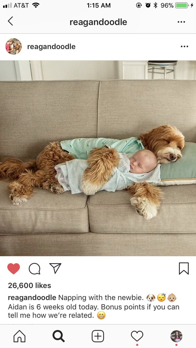 1 pic. just thought I'd share with you all the cutest Instagram account I have ever seen /