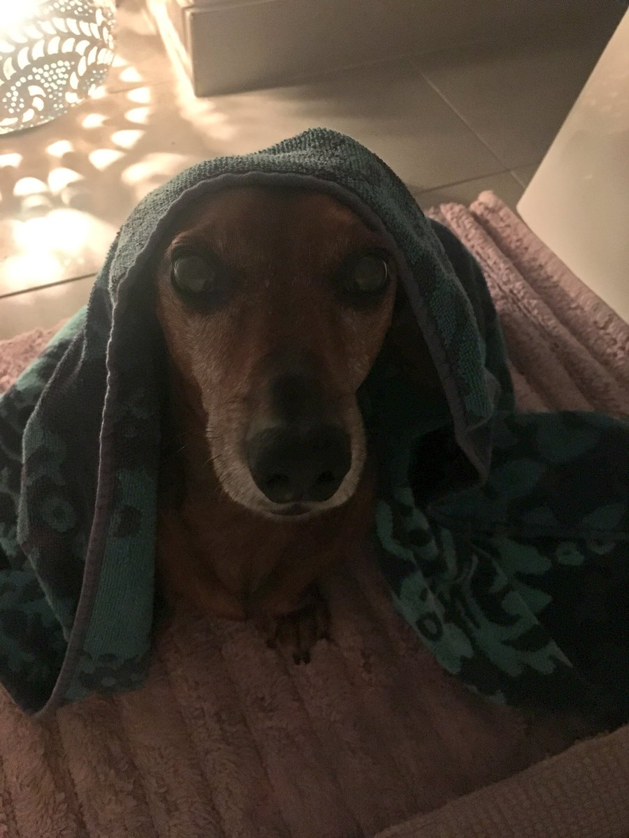 Sooooo... here goes the clean towel I had kept to dry myself with 🙈🐶😂 MJgubBUGq0
