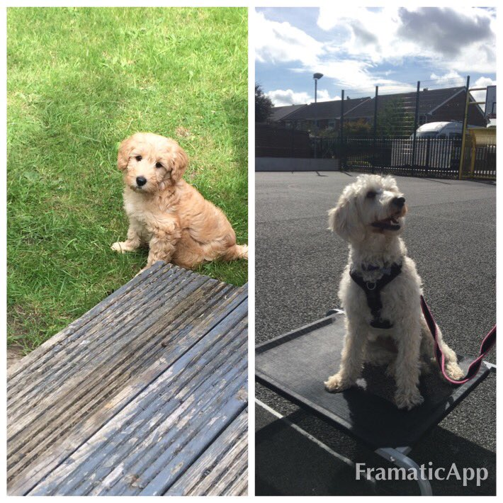 test Twitter Media - Happy 'Gotcha Day'. 2 years ago today Miss Parkes brought Daisy home.@willowsvets @Myhappydoguk https://t.co/3oknNwNcMr