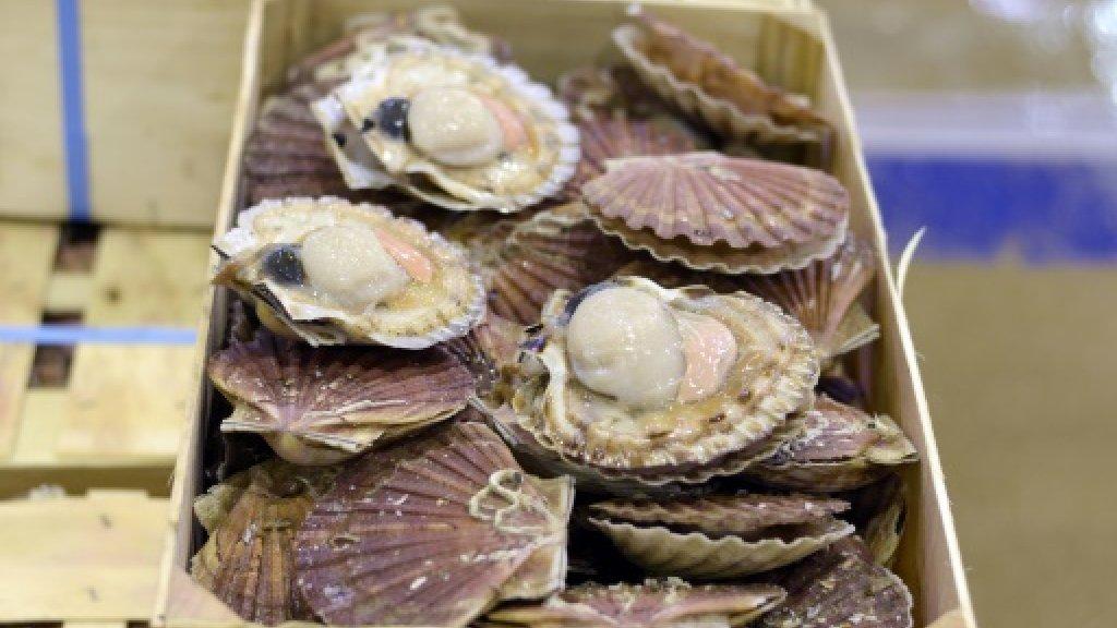 French, UK fishermen agree 'Scallop Wars' truce