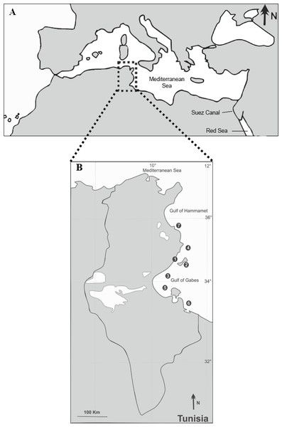 test Twitter Media - Lessepsian migration and parasitism: richness, prevalence and intensity of parasites in the invasive fish Sphyraena chrysotaenia compared to its native congener Sphyraena sphyraena in Tunisian coastal waters https://t.co/m6UFaJMBzz https://t.co/BroowOULPb