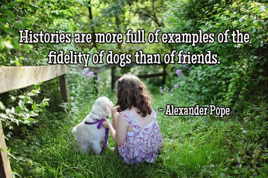 test Twitter Media - Histories are more full of examples of the fidelity of dogs than of friends.—Alexander Pope #quote https://t.co/91U2goRFt1