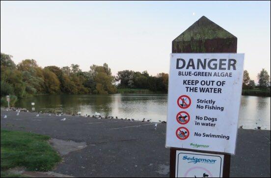 New tests find 'potentially toxic' algae is still present in Highbridge's Apex Park lakes https://t.co/DAgReNviu0 https://t.co/FBmV25wzbL