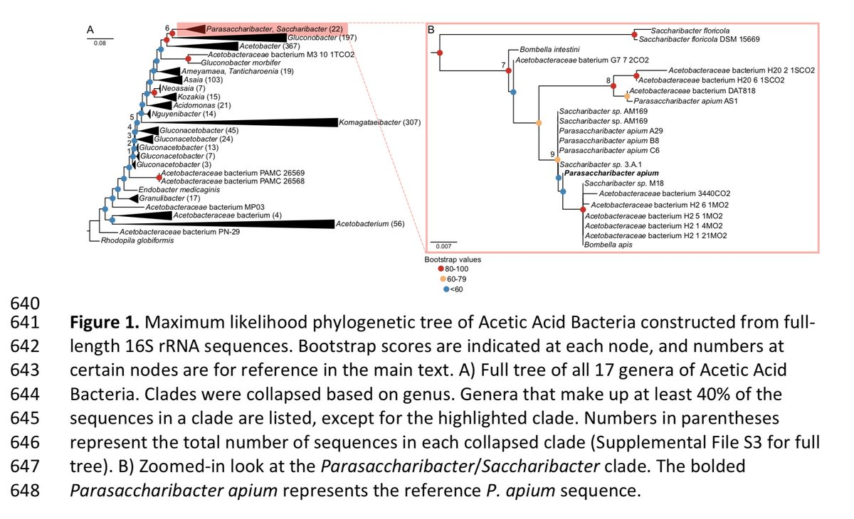 test Twitter Media - At #LAMG2018 @chicaScientific:  here is a preprint & tree of some of what she is talking about relating to queen bee microbiomes https://t.co/FZv1yYpSA1 https://t.co/oq5H6tyJU6