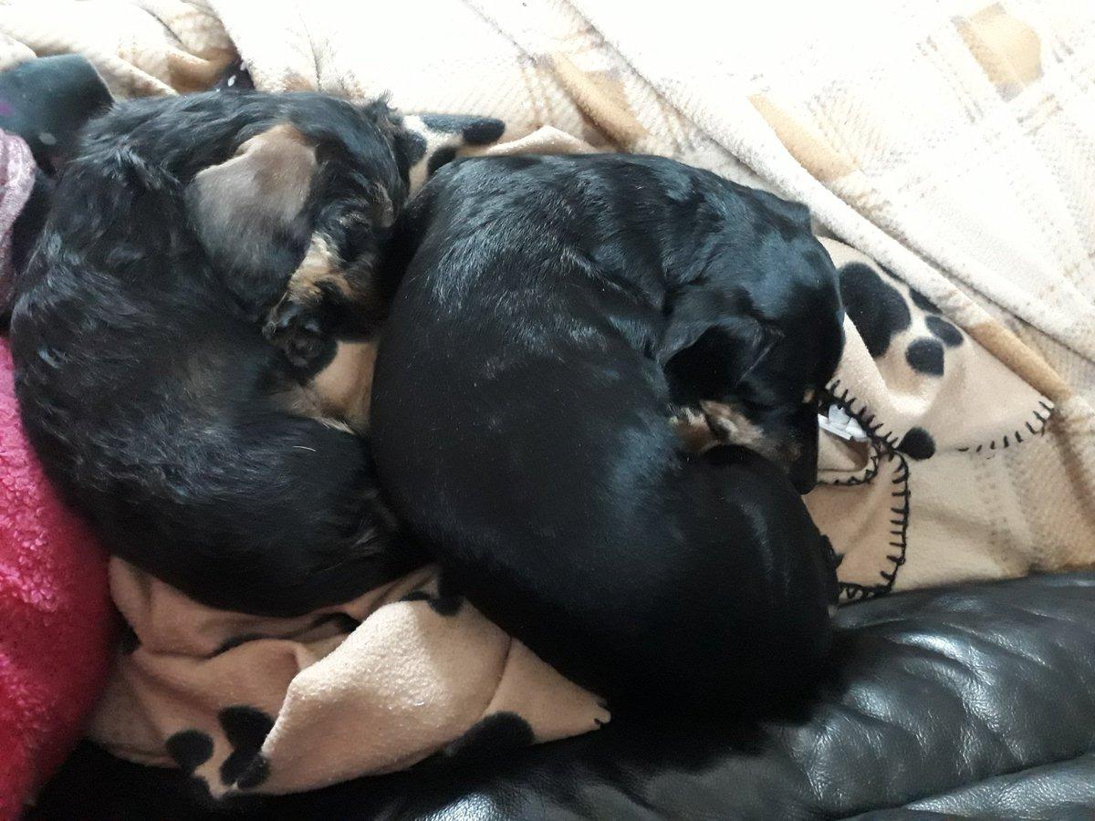 My elderly Poppy and puppy Harvey. gXutpDbF37