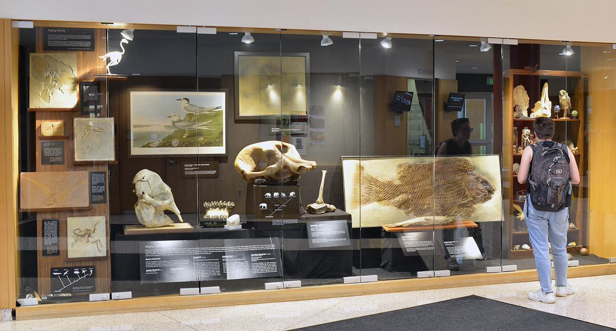 "test Twitter Media - Have you seen the Usdan display case? ""Shelving the History of Life"" is an amalgamation of natural history and curiosities from @JoeWebbPeoples, and will be available for viewing until fall recess. 🐚https://t.co/FJWCIKh6cm https://t.co/4AZ14UTvYu"