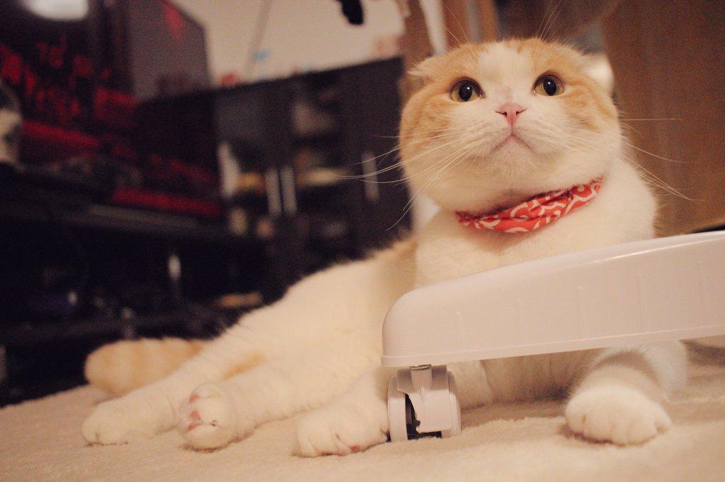 RT @una1535: #にゃんにゃんの日 #猫の日 https://t.co/fdlyvYhUXf