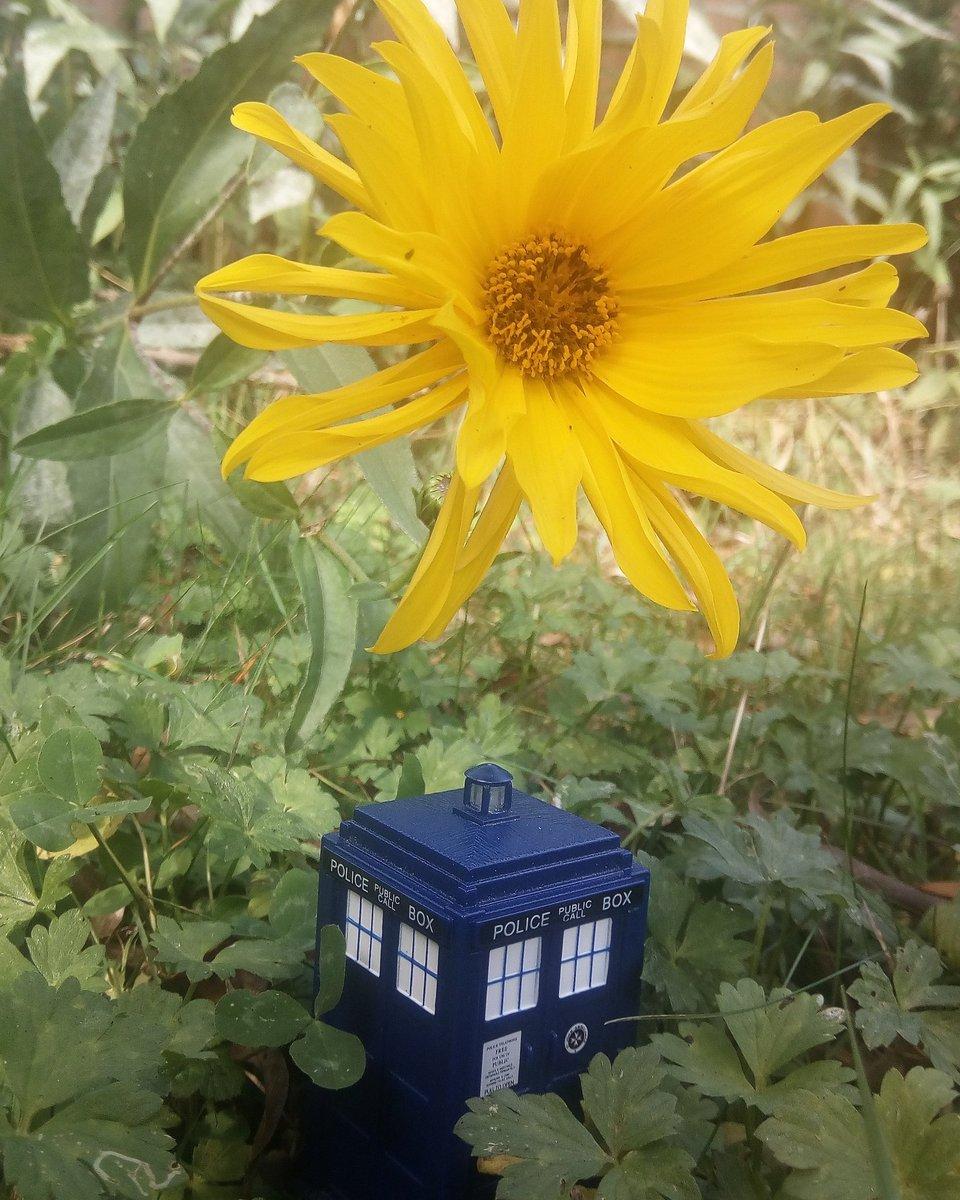 good morning 😊 #DoctorWho #TARDIS #HomeForWhovians #saturdaymood #happy https://t.co/okFgKwqJrm