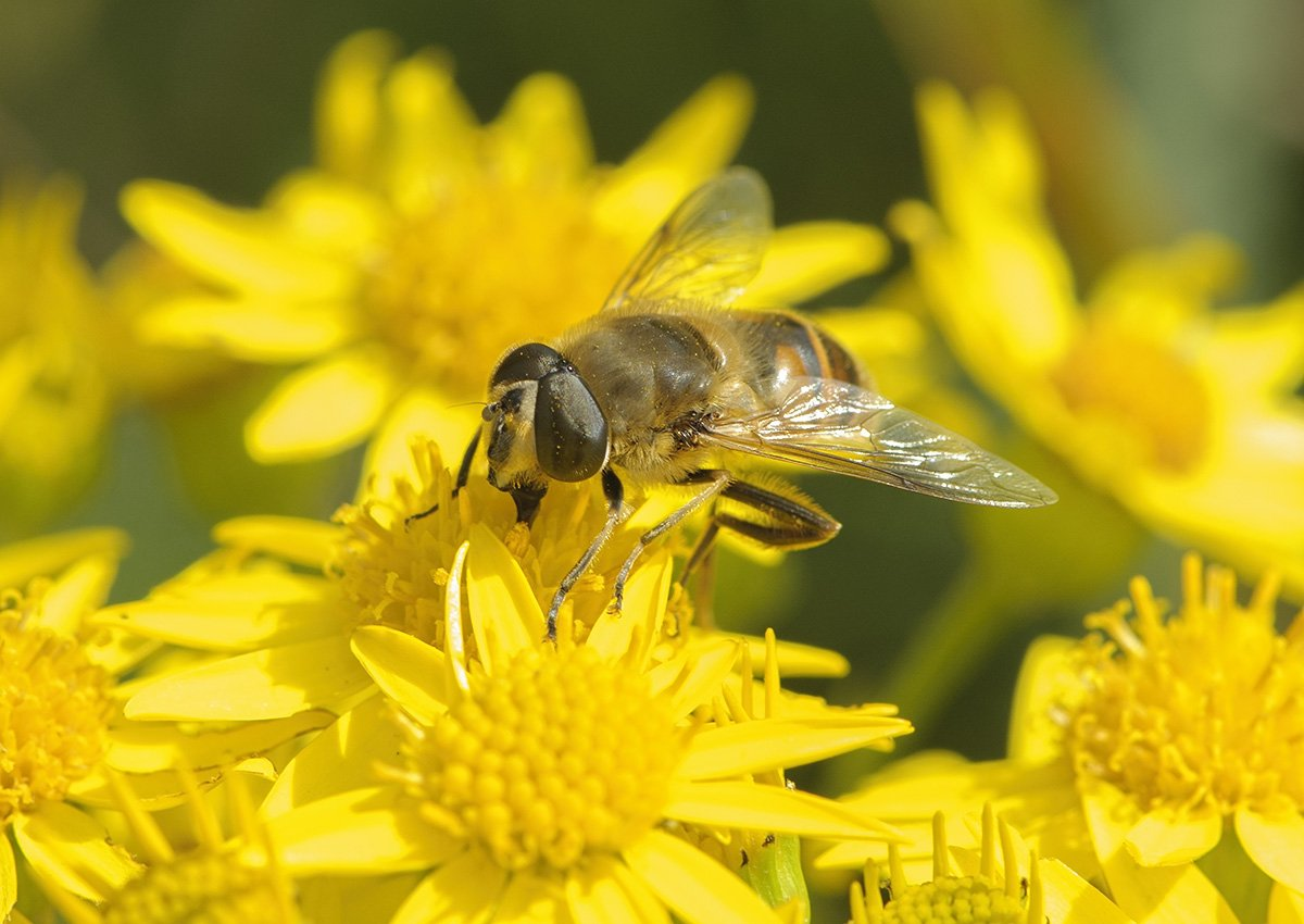 test Twitter Media - Hoverflies could be spreading bee diseases over entire continents, leading to bee population declines https://t.co/9HUJr2FfI4   | In #BiologyLetters https://t.co/BrV7qs2qkI