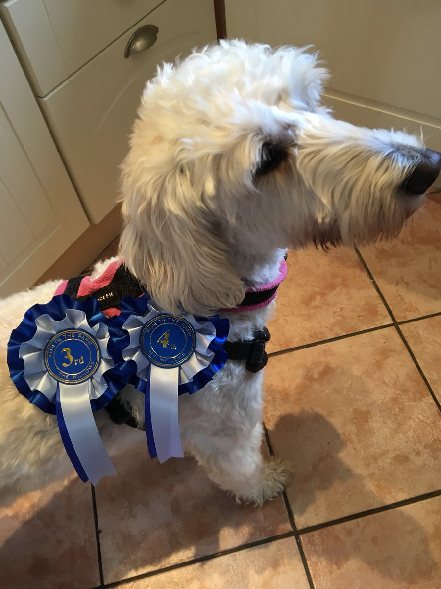 test Twitter Media - More rosettes. Well done Daisy. @willowsvets @Myhappydoguk https://t.co/L4nm0inQjb