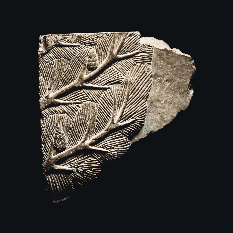 نقش برجستهای از شاخۀ درخت کاج با میوۀ مخروطی و برگهای سوزنی شکل، که بر روی گچ در قرن پنجم پیش از مسیح در دوران هخامنشیان ایجاد شده است. (عکس از کریستی) https://t.co/Sh2KqPTJno