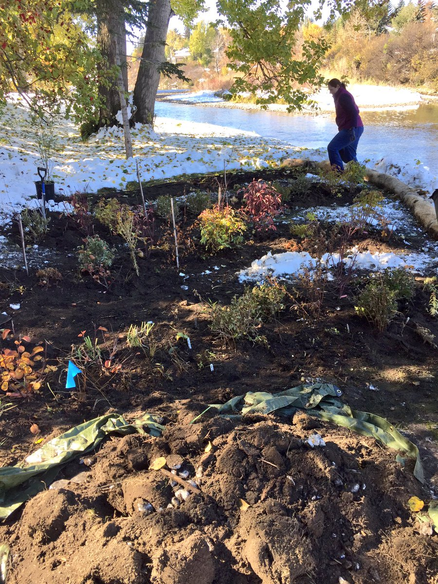 test Twitter Media - Turned out to be a great day for the planting part of our #RiverbankMakeover project - thx to @cityofcalgary for supporting this! Pics show transformation #nativespecies #floodmitigation https://t.co/n5rmbURlf1