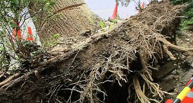 test ツイッターメディア - https://t.co/b5Q8sGsCwY 【事件に学ぶ】 台風24号のような台風で #街路樹 が #倒木 する3つの原因とは!?自宅の樹木が倒木したり看板が落下して被害を出したら賠償責任はある? https://t.co/ucQFEdHdHQ