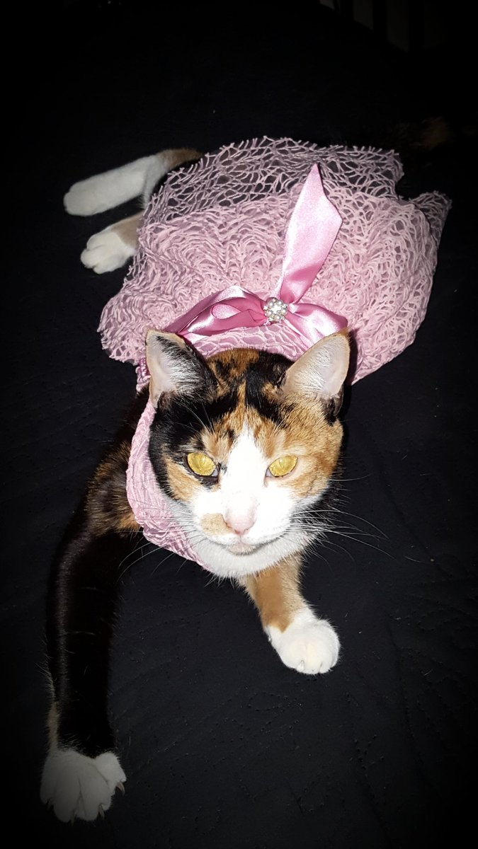 1 pic. Kitty's first princess dress... sqTu84VXMM