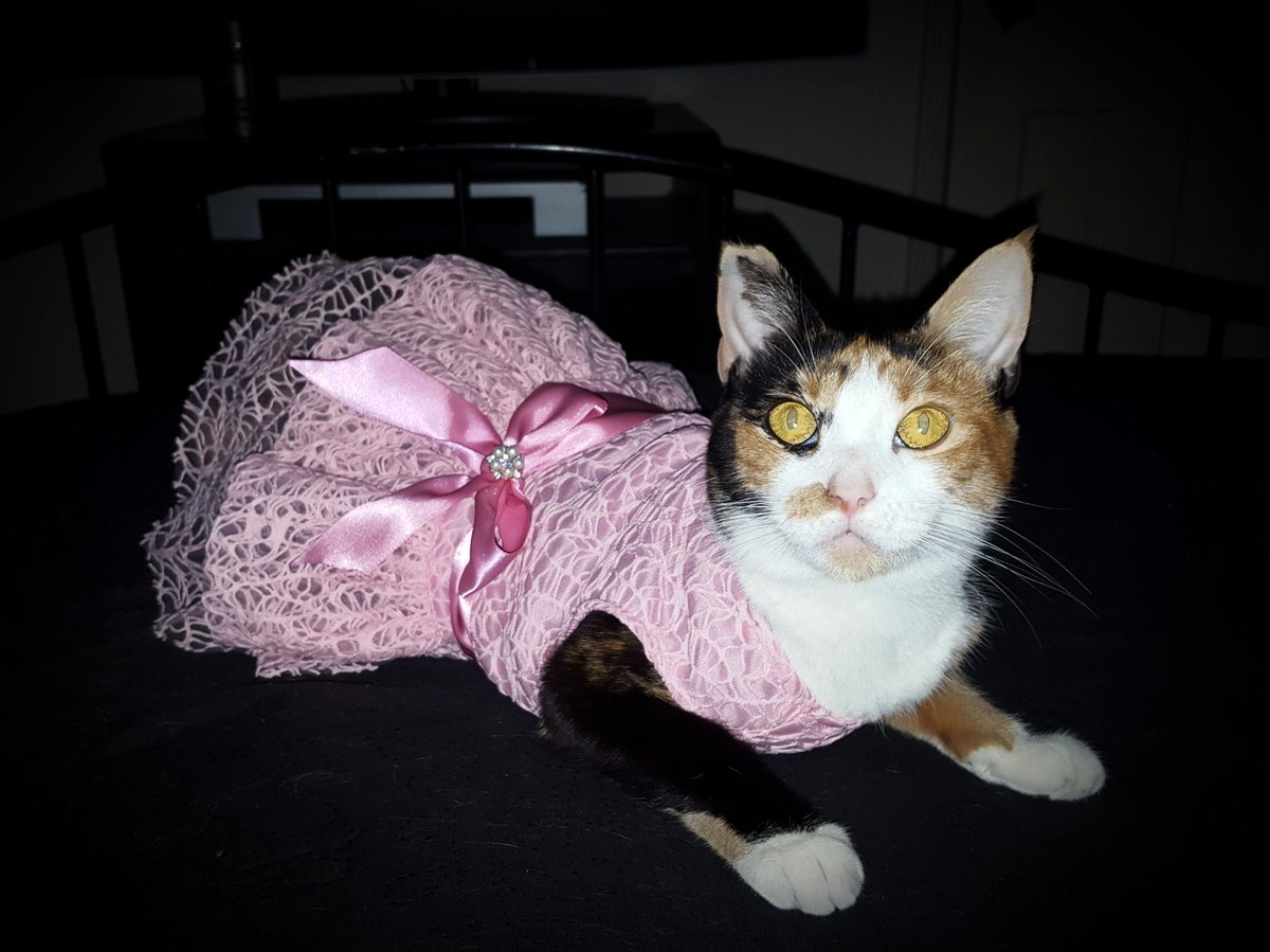 2 pic. Kitty's first princess dress... sqTu84VXMM