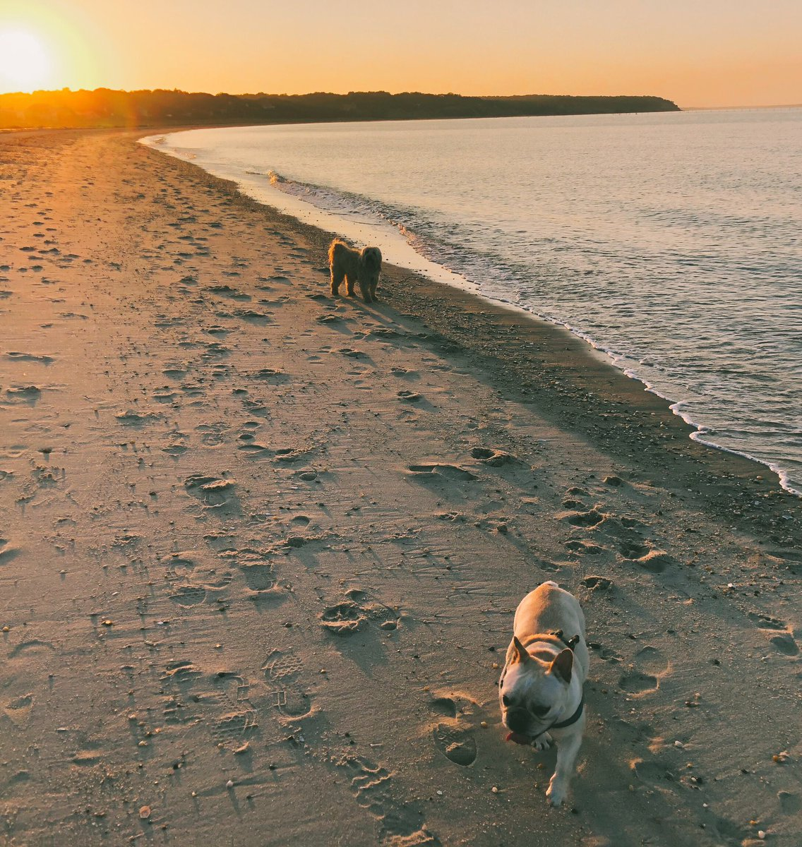 Sunset walk with Dali & Allegra https://t.co/Mb5eYBmdGA