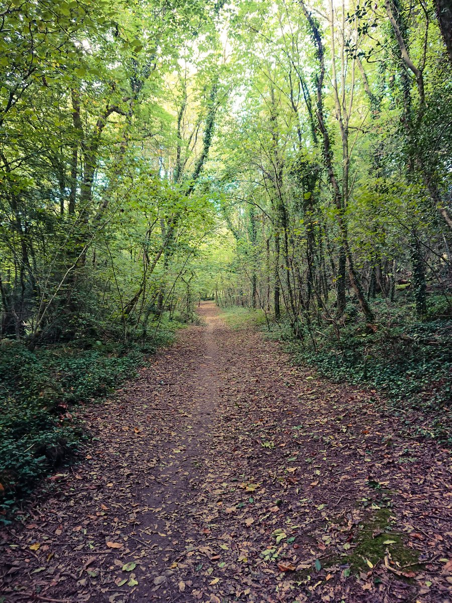 test Twitter Media - The first signs of #Autumn in Bircham Woods, #Plymouth. Sun streaming through the tree canopy gently warms the woodland floor, which is now being slowly covered with a layer of crisp leaves. https://t.co/IMdV43YCez