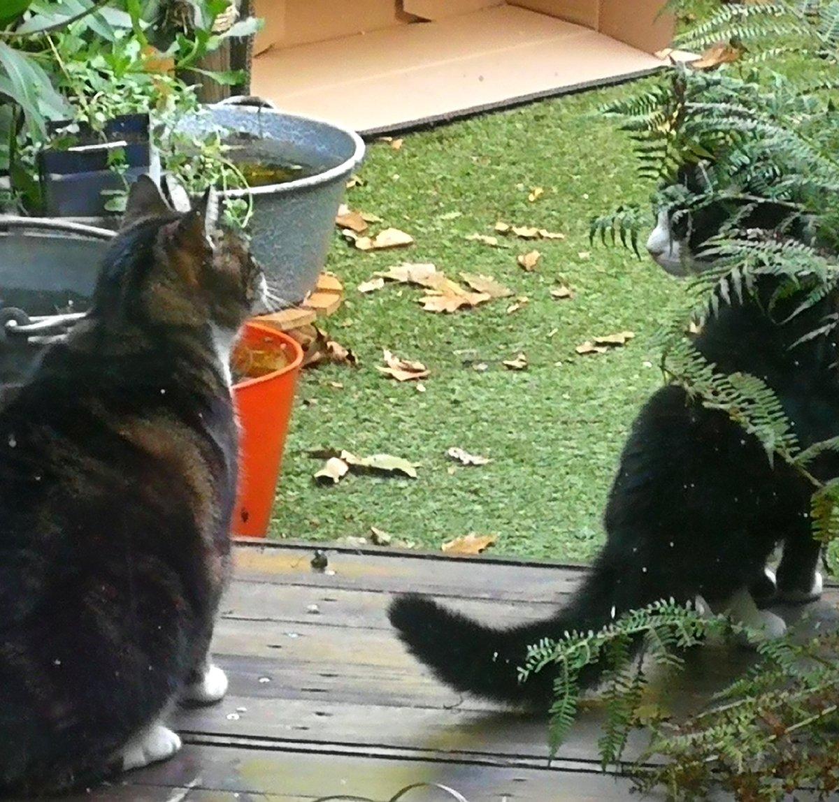 Chip en Don beveiligen nu samen de tuin! #lifeisgood 🐾💋🐾💋🐾💋 J0Rc17NdwF