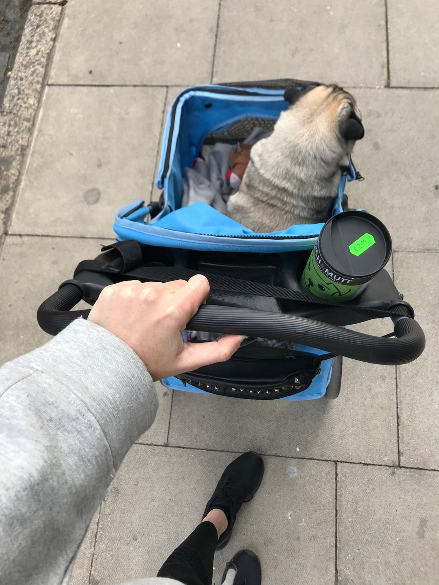 Taking my little disabled piggy for some fresh air 💙 3WpeD3zV9J