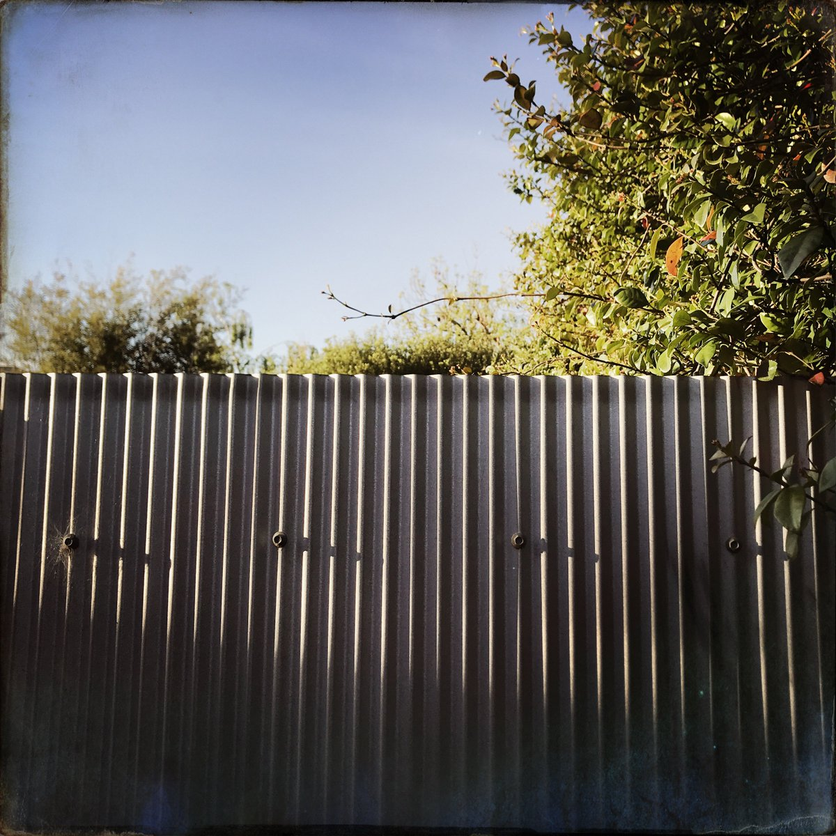 fade into . #shadows #corrugated #flora #sky #Hipstamatic https://t.co/cfTlYS9HYT