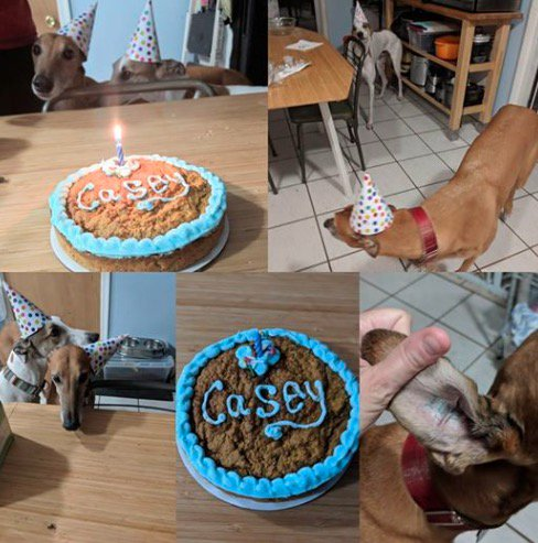 Happy 8th birthday, Casey!  Photo: GFNJ adopter Liz M.