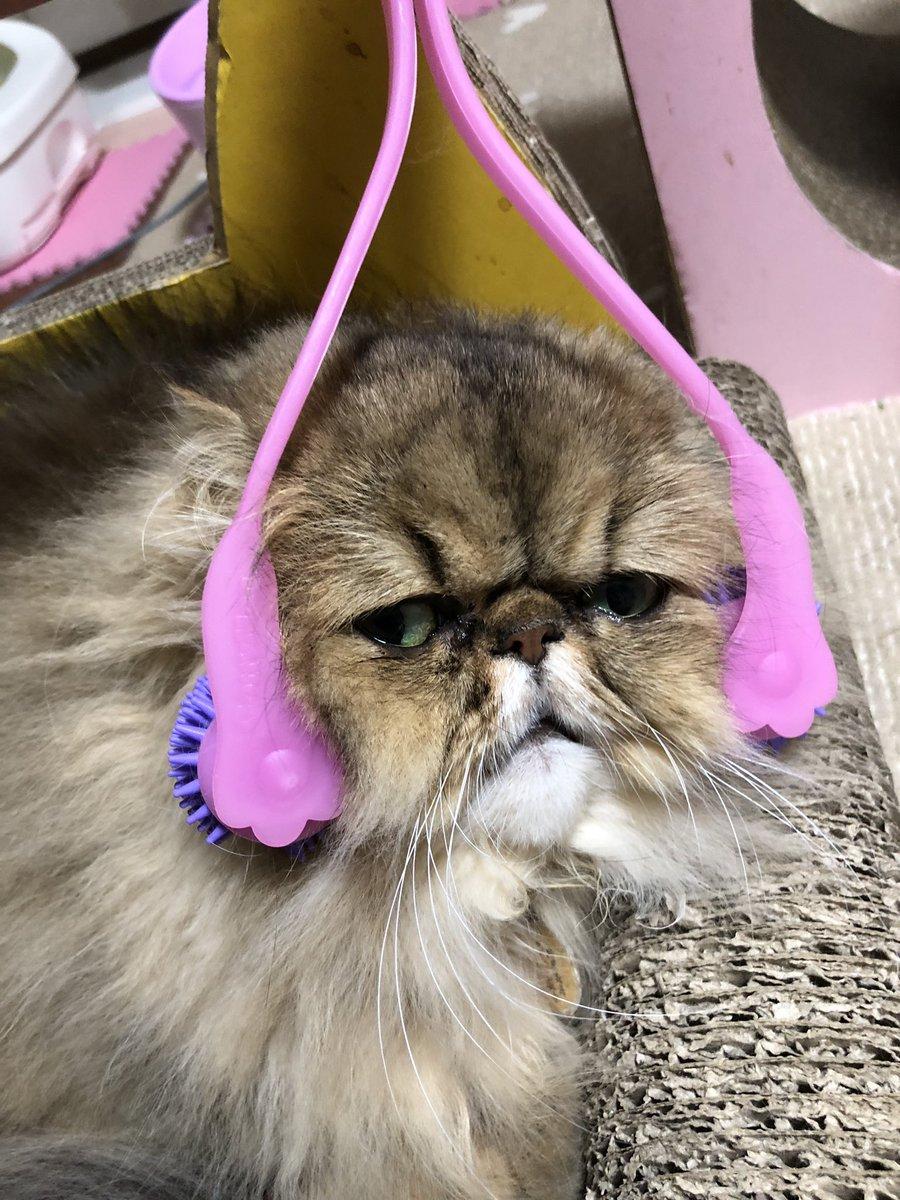 猫 マッサージ
