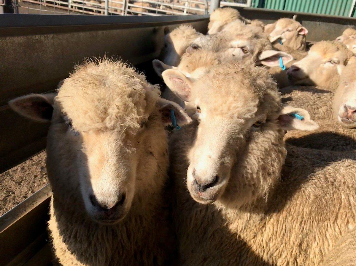 The Tasmanian Livestock Health Monitoring Report...