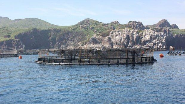 RT @PanoramAcuicola: Darán taller de peces marinos en aguas expuestas Artículo completo: https://t.co/1ttjIjJ5Yp https://t.co/N9nn4HtpYo