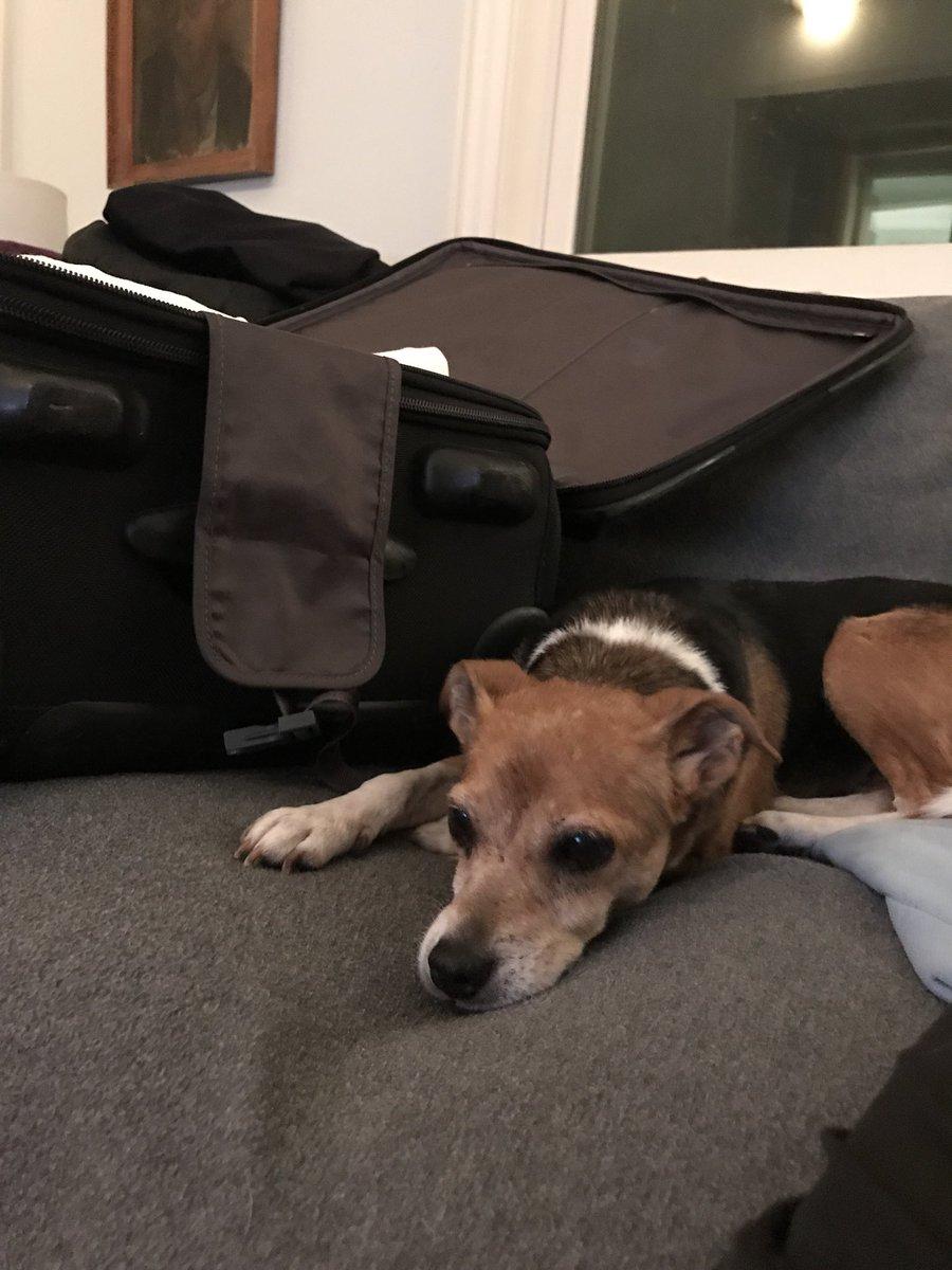 CoCo is not Happy!  😢😢😭😭 B5nzIUugq4