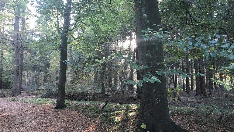 test Twitter Media - Stichting het Drentse Landschap gaat de bossen en natuurterreinen in en rond de stad voor de komende vier jaar beheren. Ook gaat ze weer het Duurzaamheidscentrum runnen https://t.co/AjszIpuRtk https://t.co/E8JhCzG1tj