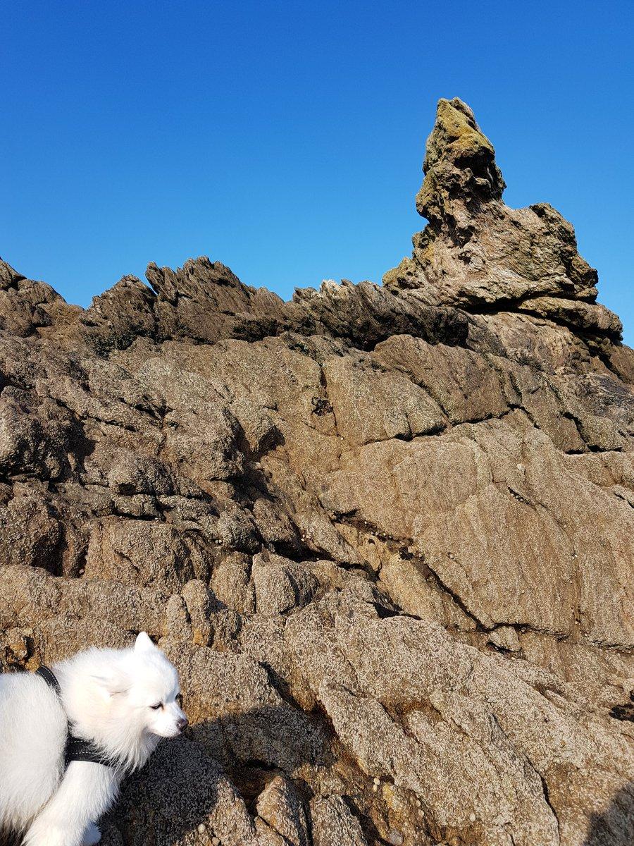 ちなみにこの岩のてっぺんが私とわさびの特等席!!散歩の時はここに来る。ただ海をみて日光浴する。潮風がいっつも気持ち良い。海だいすっき。 あー釣りしたい。 https://t.co/xu8eXBqIw4