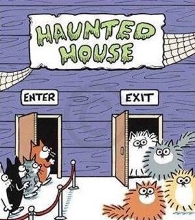 Poor kitty's! How many of you would look like that? #vieravet #cats #Hauntedhouse #October https://t.co/OjBXHw0Zqp
