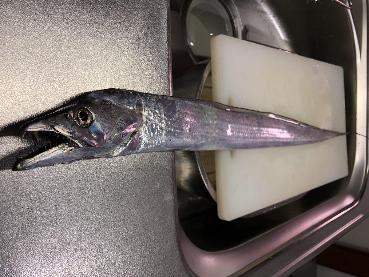 フラップ釣法のタチウオ釣りの大会に出てきました!  結果は1匹で12位。 1番釣れた人は2匹で激渋。  ポーアイ沖はもうほとんどタチウオいないなー  これからは湾奥  来月の1dayトーナメントはデカイの釣りたい! https://t.co/GGtYt0YkJ6
