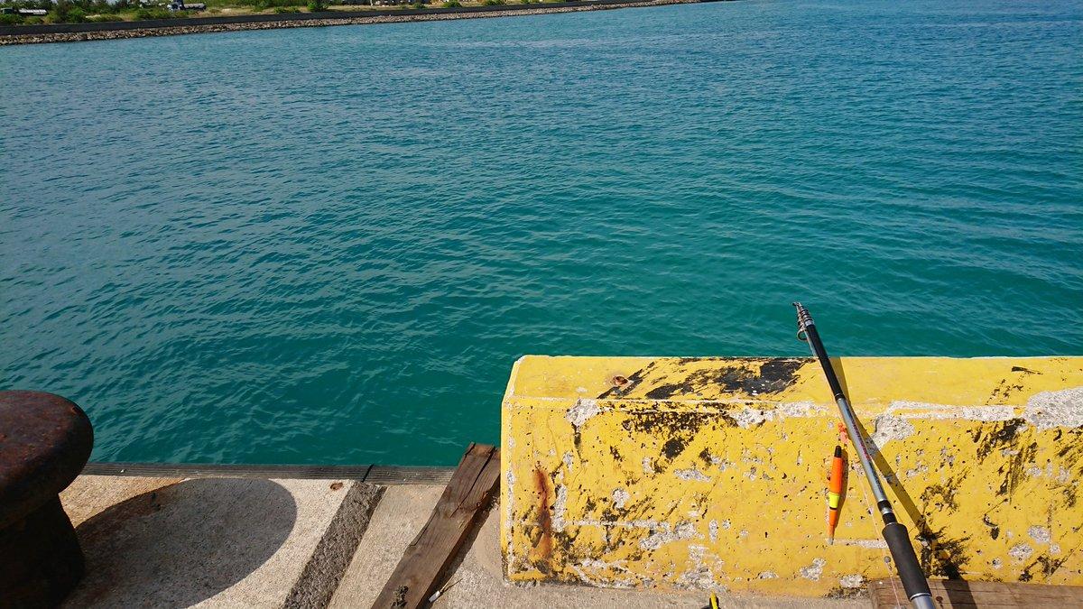 今日は非常によい釣り日和でした! (釣果はマルサヨリ1匹、ホシザヨリ1匹) https://t.co/DDkMyVzb5B
