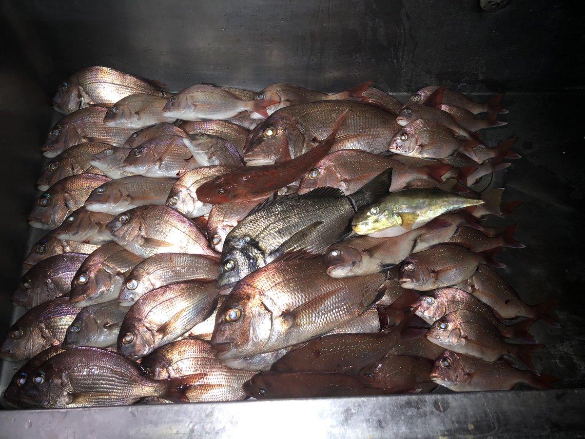 昨日の釣果 タイだけで86枚 外道でクロダイ、サバフグ、ホウボウ、ワラサが1匹づつ 合計90匹 タイ欲しい人はDMかLINEしてください。ちゃんと捌いて渡します https://t.co/Zk1vz8lAQk