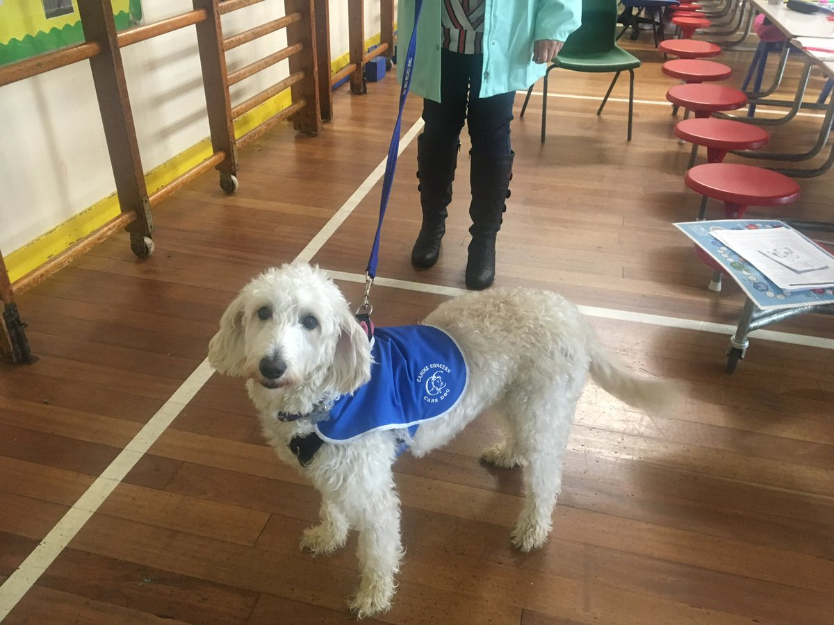 test Twitter Media - Now Daisy is a Care Dog @canineconcern1 @CanineConcern Miss Parkes & Daisy will be visiting Elizabeth House Care home every few weeks.@willowsvets @Myhappydoguk https://t.co/7Kwab5Mgat