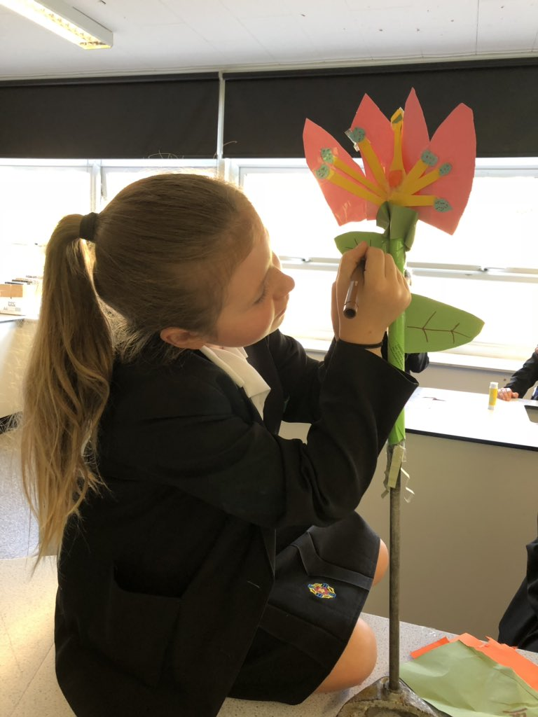 test Twitter Media - Year 7 scientists are making clamp stand flowers to understand the different parts of a plant and pollination https://t.co/dgMLdXNiqN