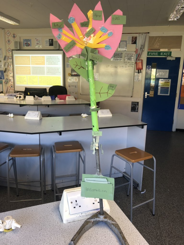 test Twitter Media - The finished plant models. Year 7 learners produced some outstanding work. Well done! https://t.co/sEMrpHJl6i