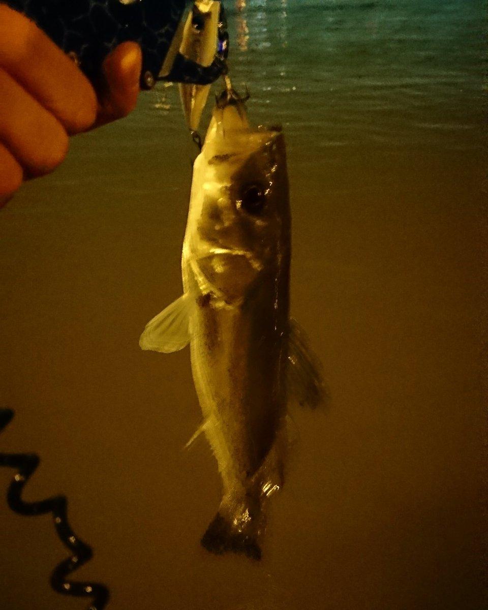 釣り場がバッティングしたお兄さんと一緒に釣りしました。 かなり上手い人だった。  初めて他人とコラボしたけど自分より上手い人と釣りするのいいなぁ。   #シーバス #ダイワ #ソラリア #クロスウェイク  #ランドラゴ https://t.co/qRMx5K1E1n
