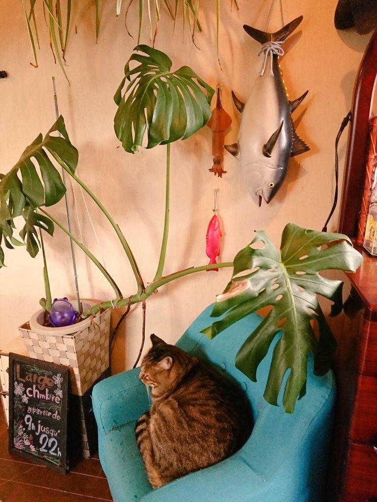 @redmt_07 マグ郎さんですね✨(* ॑꒳ ॑*  )  ココはらるーさんの「釣果壁」なんです✨  お魚物はココに吊ってあげて、ちょっとでも猫らしく(←?笑)飾ってあげるの✨(*´꒳`*) https://t.co/hja8o0YBxK
