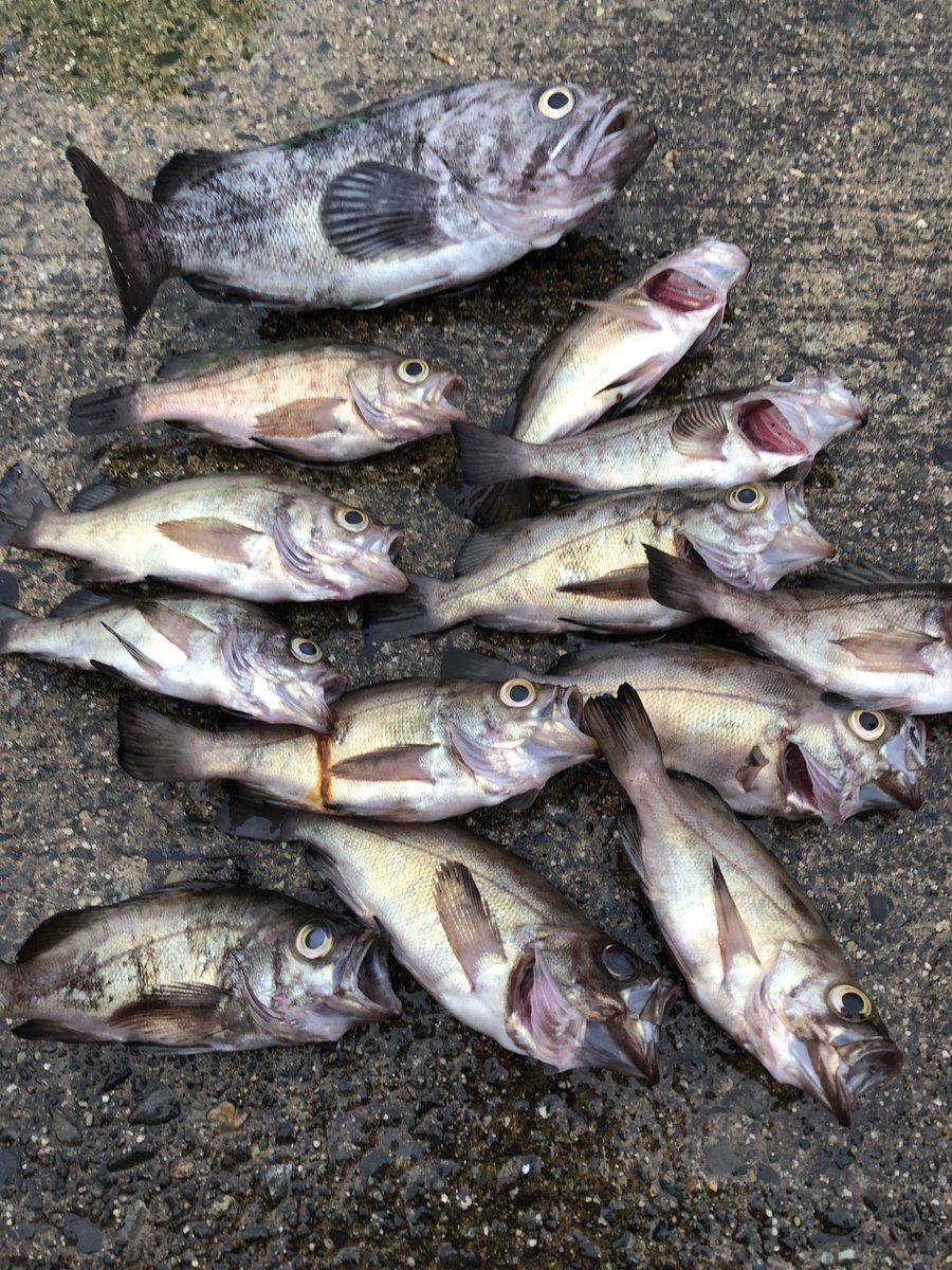 今日の初の海夜釣りの釣果‼️ 帰って美味しくします https://t.co/l6G7SEzcIa