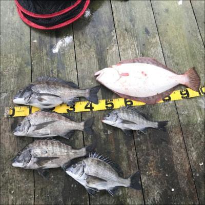 京都府 黒鯛釣具 (10月10日の釣果)  下佐波賀イカダで チヌ46cmを頭に5匹とヒラメ58cmの釣果。  https://t.co/dDQlDI6vME https://t.co/9MCWouKJQg