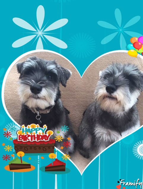 Happy birthday Dawn......love from Dotti and Daisy in rainy Roche xx