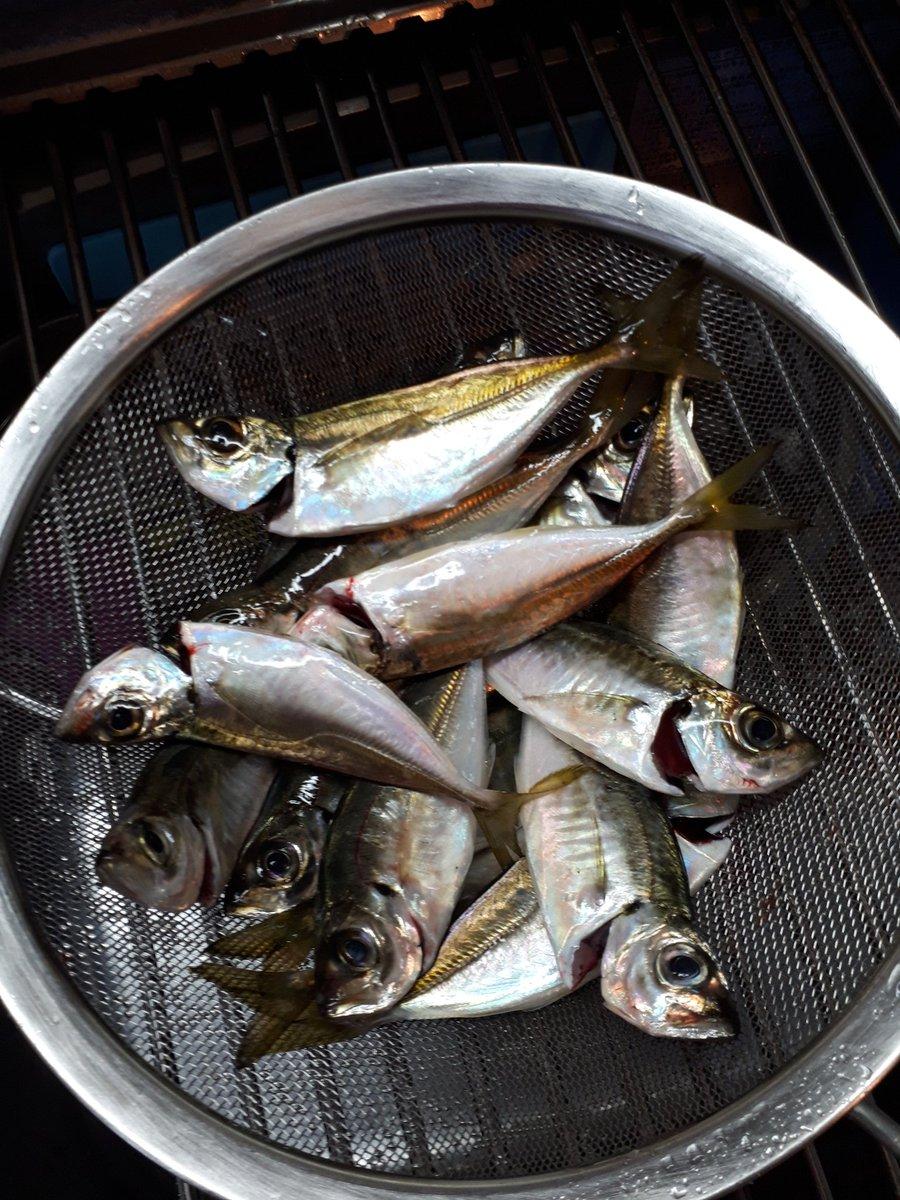 さぁ今晩は何の料理になるのか!? ちゃちゃっと捌きましょうp(^^)q  ※9月上旬からのアジの釣果は283匹♪  #アジング #豆アジ #もうすぐ300匹 #アジパラダイス https://t.co/agP6LQ2b8s
