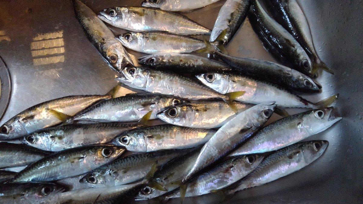 今日の釣果は29匹で大漁でした‼️ https://t.co/tLJ3CUXHxa