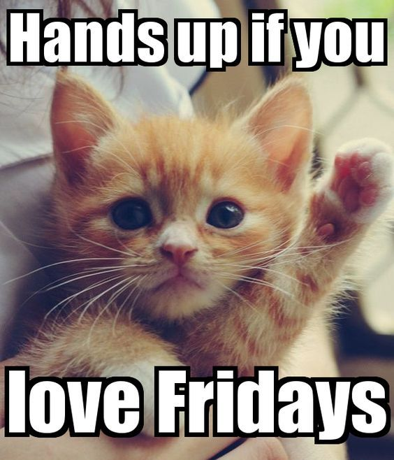 Thank kittens it's Friday! #vieravet #Friday https://t.co/mG8U3Ke5M9