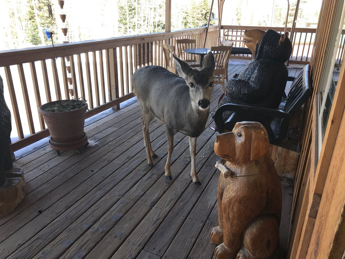 At a resort in Utah and here's this deer standing on the porch. d9Cxctz40S