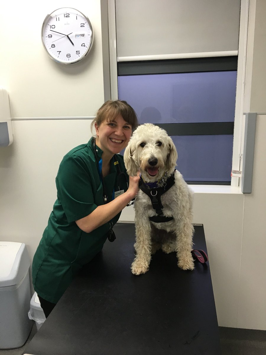 test Twitter Media - Thank you @willowsvets for our free boosters & checkup. Daisy is in good health and so well behaved for Amy the vet. https://t.co/fUly2f7H5B