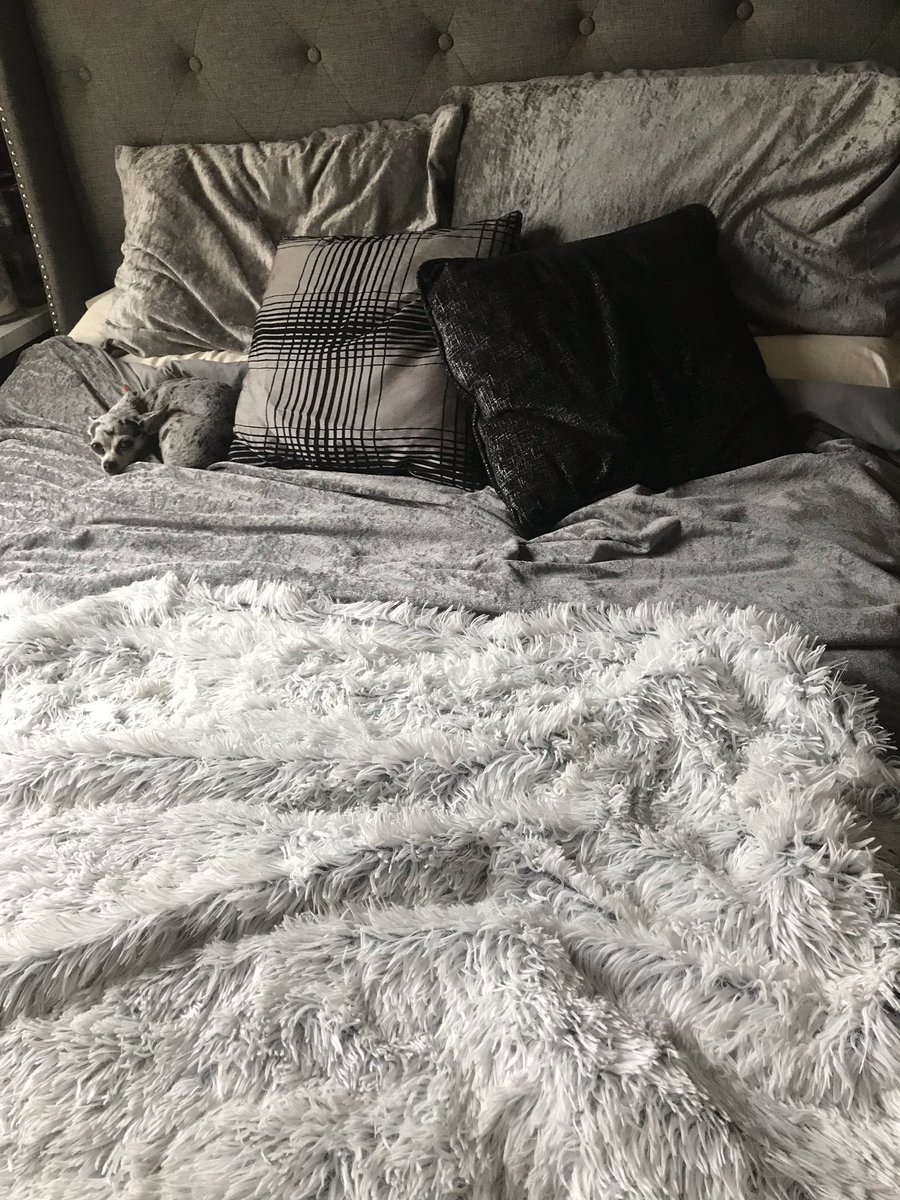 When your dog blends into your bedding 😂🙈 #Chihuahua #doglife zEYF06HNqF